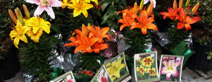Recycling Easter Bulbs and Lilies
